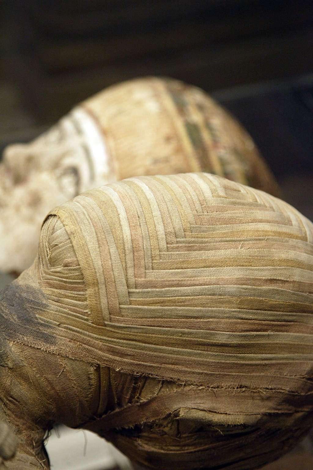 Les préhistoriens spécialisés dans l'étude des pathologies préhistoriques, les paléoanthropologues, observent de près les restes osseux et les rares momies découvertes. Ils ont pu découvrir diverses pathologies affectant les os et dans certains cas découvrir des interventions humaines destinées à soigner la personne. Ces dernières années, l'usage d'un matériel sophistiqué (radiologie, IRM, etc.) ou de techniques nouvelles (études ADN) permet de remarquables avancées dans les connaissances. © Netfalls, shutterstock.com