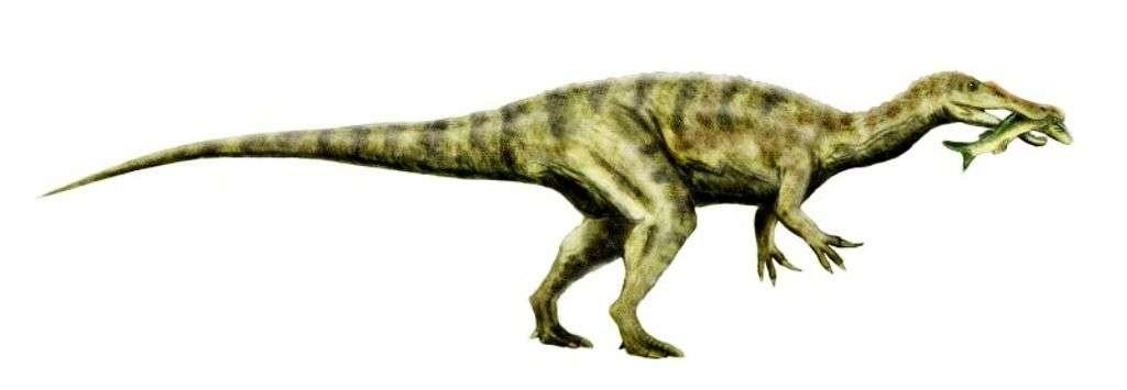 Une reconstitution de Baryonyx walkeri, un spinosaure. © Nobu Tamura-wikipédia