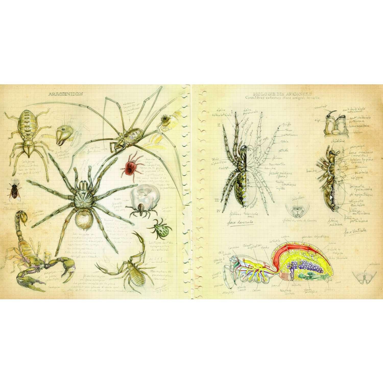 Étonnez vos proches en leur offrant ce superbe livre sur les araignées, à découvrir pour s'émerveiller. © Belin