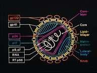 Crédits : INSERM 95.STRUCTURE DU VIRUS DU HIV1, RESPONSABLE DU SIDA (CORE = NOYAU; LAYER = COUCHE; KNOB = PROTUBERANCE).