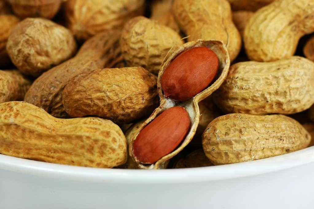 L'allergie aux cacahuètes, après celles au lait et aux œufs, figure parmi les allergies alimentaires les plus fréquentes. Une fois avalées, les cacahuètes peuvent causer des réactions simples, telles que des éruptions cutanées avec démangeaisons ou une poussée d'eczéma, mais peuvent s'avérer bien plus dangereuse en cas de choc anaphylactique. © Lakeside, StockFreeImages.com