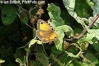 Le déclin des papillons démontre celui de la biodiversité