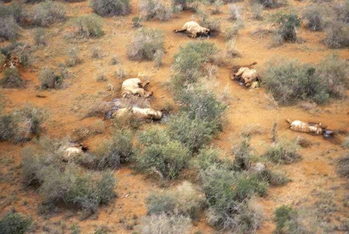 Scène de braconnage au Tsavo National Park. Crédit : IFAW