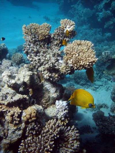 Les fonds marins, comme la Grande Barrière de corail au large de l'Australie, pourront être observés grâce à Google. © Morozova Tatyana (Manamana)