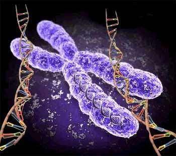 La calvitie est-elle gouvernée par nos gènes ?