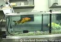 Expérimentation sur des poissons