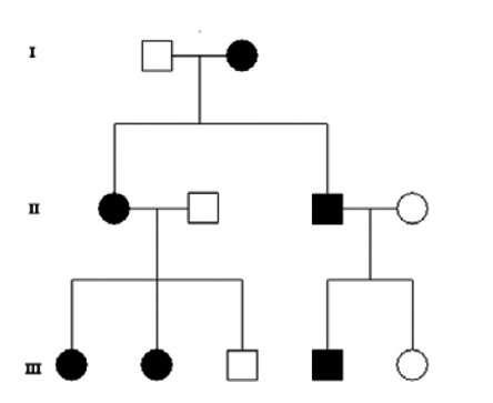 Le succès reproducteur d'un individu dépend de la capacité à transmettre ses gènes. © domaine public