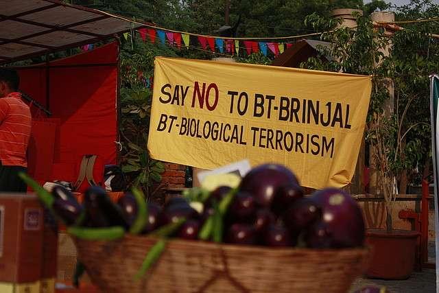 Les aubergines OGM sont à l'origine de l'action en justice de l'Inde contre Monsanto. © Joe Athialy, Flickr, cc by nc 2.0