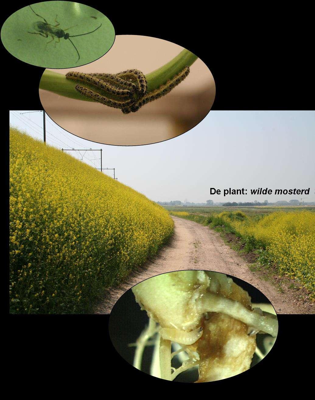 Une interaction complexe entre des animaux d'espèces complètement différentes. © Department of Multitrophic Interactions (MTI)/NIOO