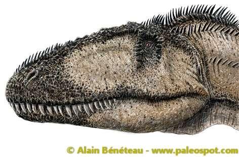 Reconstitution de l'aspect du Carcharodontosaurus, un dinosaure carnivore qui était plus long que le Tyrannosaurus rex. © Alain Bénéteau