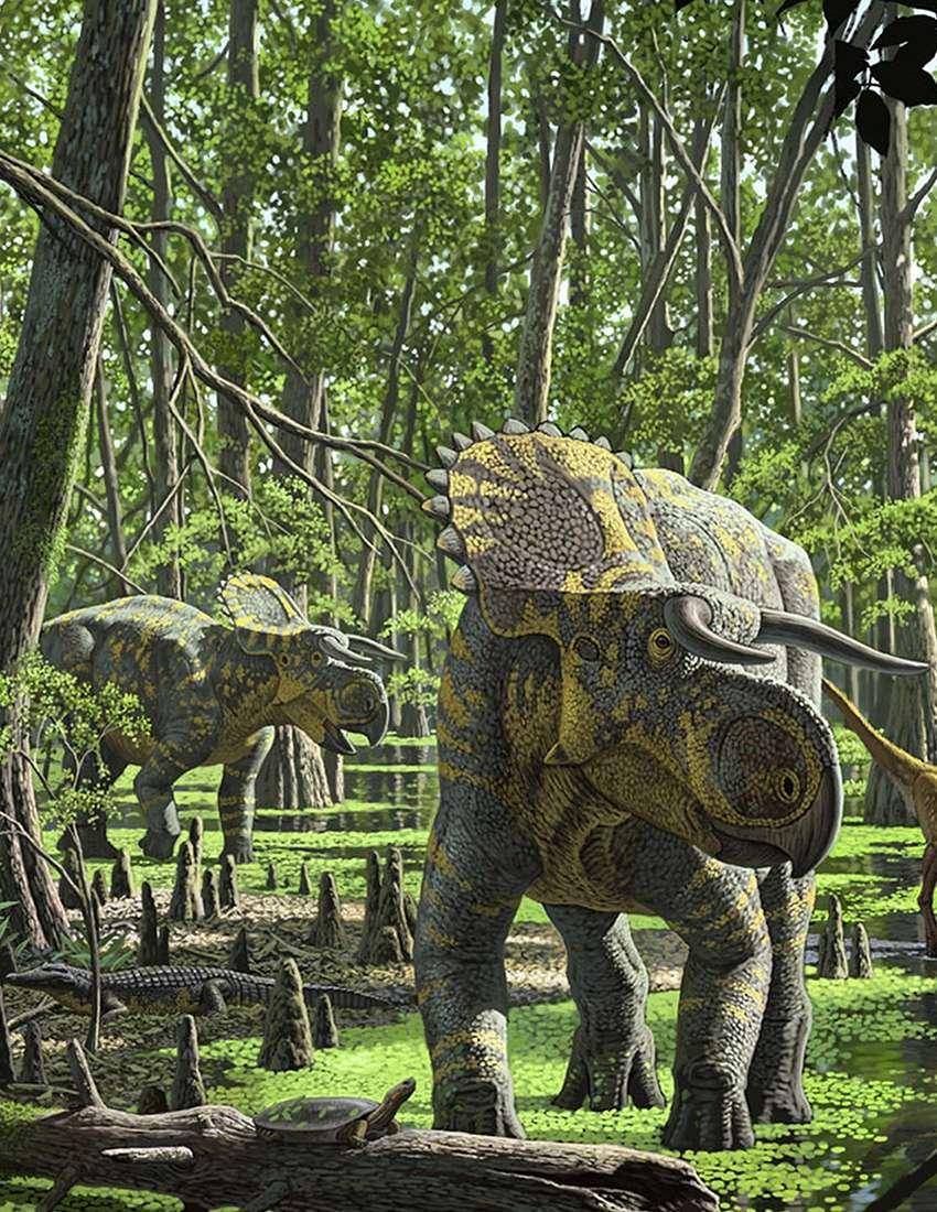 Nasutoceratops titusi dans la forêt au sein de laquelle il devait évoluer au Campanien, voilà 84 à 70 millions d'années. La corne nasale de cette espèce s'est transformée en une forme de lame allongée, ce qui explique pourquoi nous ne la remarquons pas. © Raúl Martín