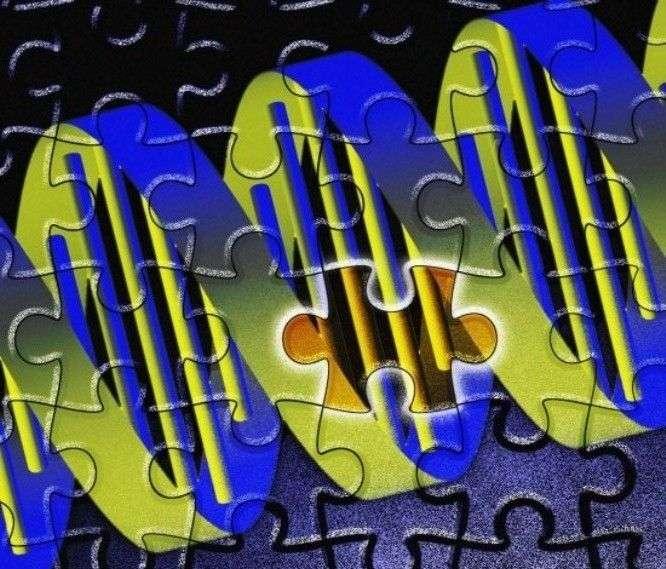 Plus les deux lignées parentales sont éloignées, plus grande est la proportion de gènes qui existent en deux versions différentes, celle de maman et celle de papa. Quel est l'effet de cette hétérogénéité ? Des chercheurs ont tenté de l'estimer. © Adrian Cousins, Wellcome Images, CC by-nc-nd 2.0