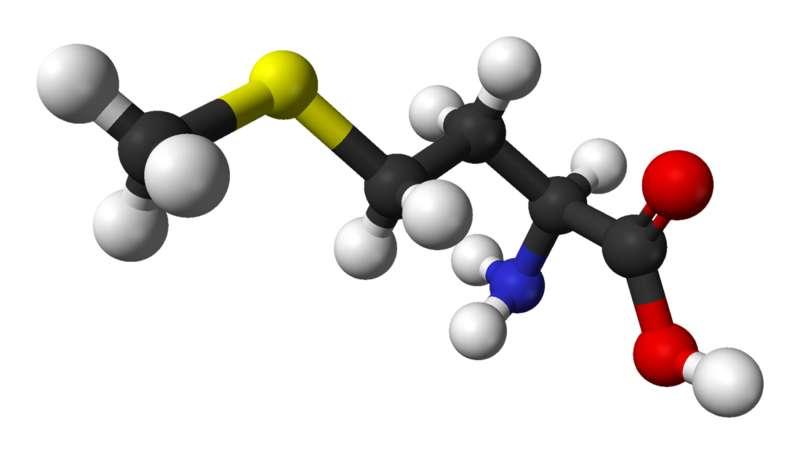 La méthionine est un acide aminé essentiel. © Ben Mills, Wikimedia, domaine public