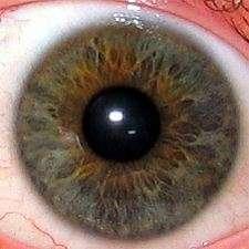 Sur cette image on peut observer l'iris et la pupille d'un œil. Le diamètre et la contraction de la pupille varieraient avec la douleur. © Michael Reeve, Wikimedia Commons, cc by sa 3.0