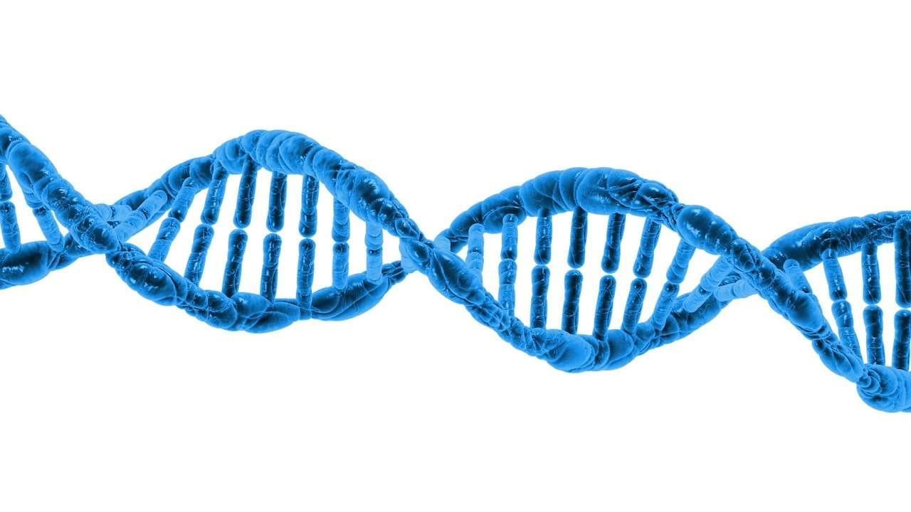 Après nos données personnelles, les géants de la high-tech lorgnent sur notre ADN. Apple travaille ainsi sur un projet d'application pour iPhone qui serait combinée avec un test ADN. Le système permettrait aux chercheurs de mener des études génétiques à grande échelle. © Pixabay, CC, DP