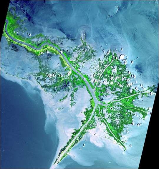 Delta du fleuve Mississipi à son entrée dans le Golfe du Mexique. © Nasa