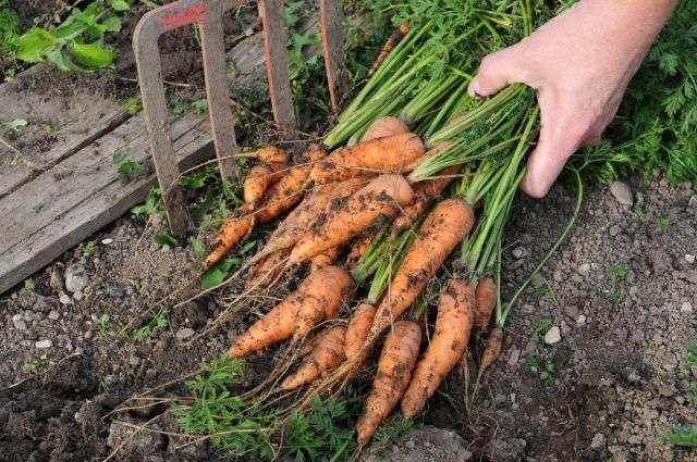 Avoir un potager n'est plus ringard, la tendance est au jardinage bio, que l'on ait un jardin ou un simple balcon ! © PeJo/shutterstock.com