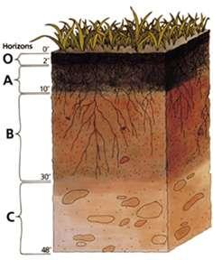 L'humus se trouve dans la partie supérieure de la coupe, au niveau de l'horizon O. Il est de couleur foncée car il contient beaucoup de carbone. La deuxième couche (A) correspond à un mélange de la matière organique avec des composés minéraux. Il apparaît grâce au brassage du sol par des organismes vivants (vers) ou par divers outils. © UCDA