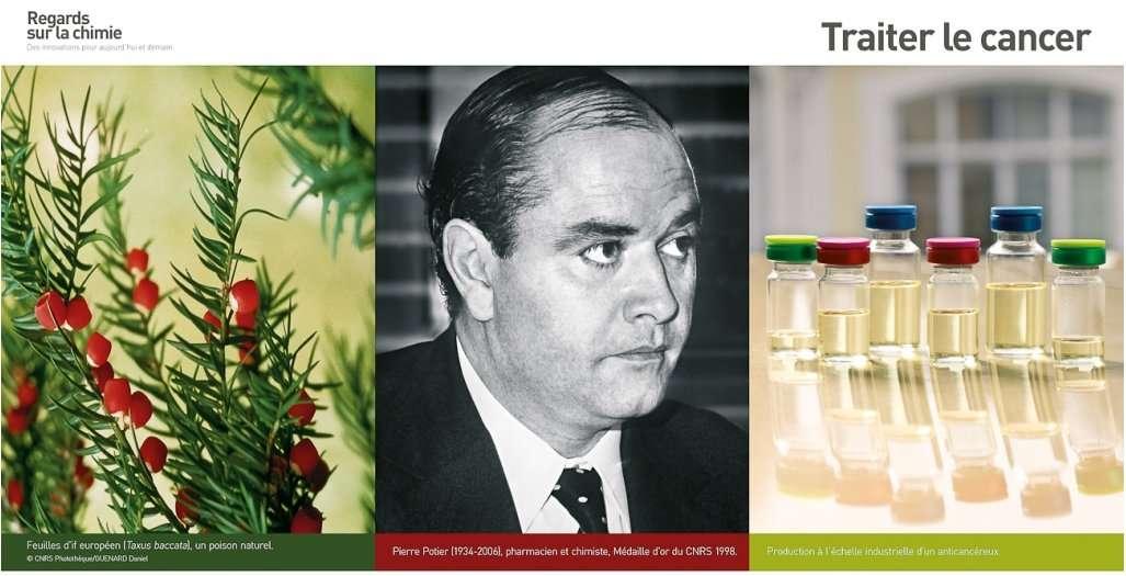 Au CNRS de Gif-sur-Yvette (dans l'Essonne), dans les années 1980, l'équipe de Pierre Potier a extrait de l'if une molécule très efficace contre la cancer. Elle est aujourd'hui couramment utilisée contre les cancers du sein et de l'ovaire. © Regards sur la chimie
