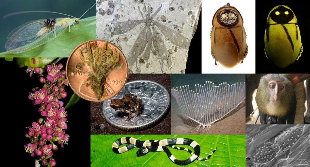 Cette mosaïque d'images montre le top 10 des nouvelles espèces décrites en 2012. Cette sélection a été réalisée par des scientifiques du monde entier sous le contrôle de l'International Institute for Species Exploration. © IISE