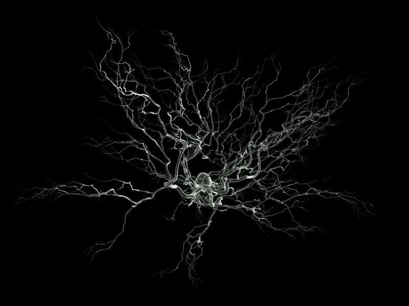 Les neurones, les cellules du système nerveux, ici vus par un artiste, ne sont pas renouvelés à leur mort. C'est pourquoi certaines capacités cognitives diminuent avec le temps. © Nicolas P. Rougier, Wikipédia, Licence GNU