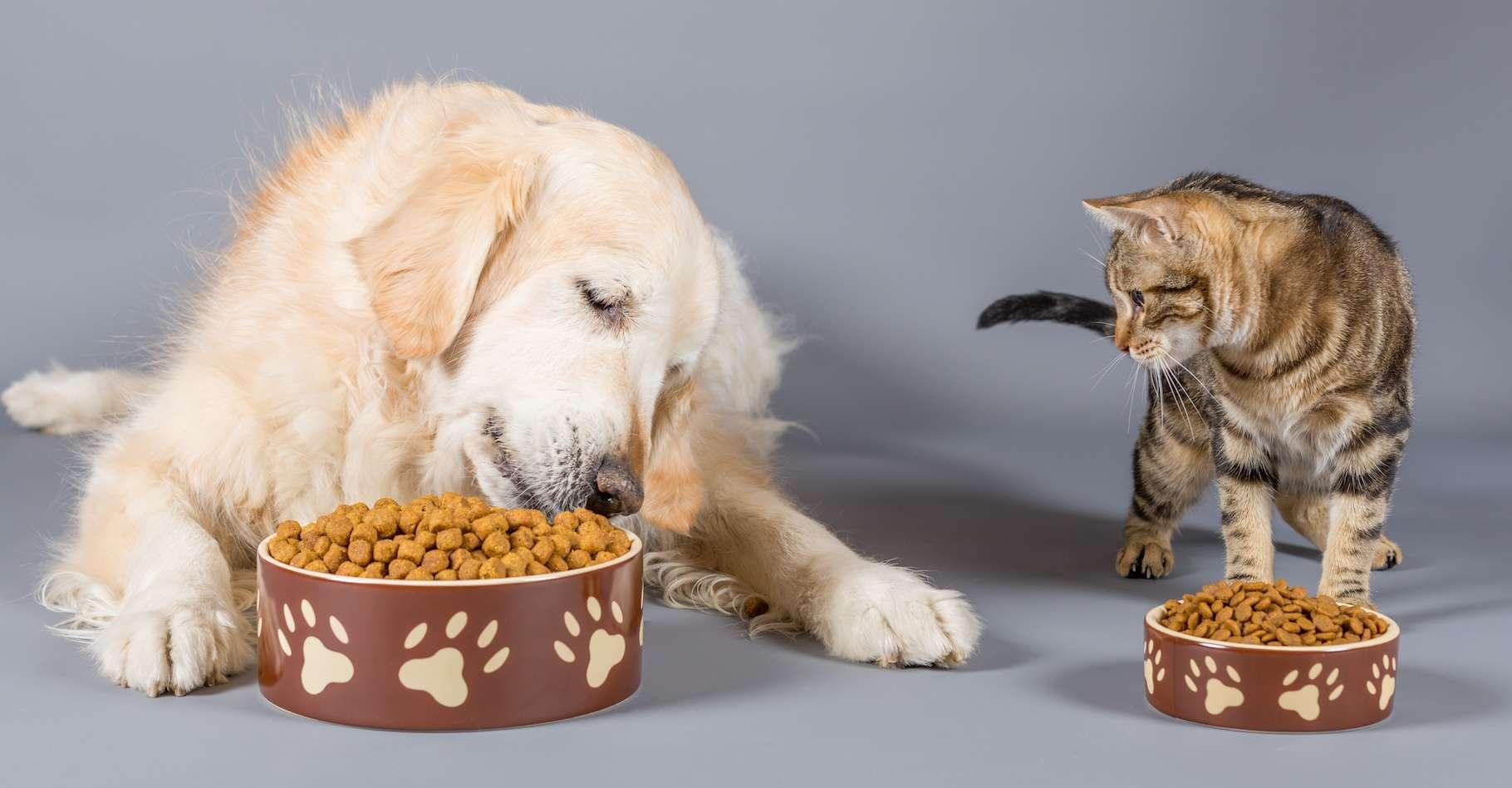 Avec l'augmentation des revenus, le nombre de chiens et de chats dans les foyers augmente. Et avec lui, l'impact de nos animaux de compagnie sur l'environnement. © 135pixels, Adobe Stock