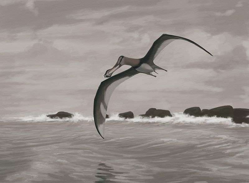 Premiers vertébrés à avoir volé et battant des records d'envergure (jusqu'à 12 mètres), les ptérosaures sont apparus au Trias, il y a 230 millions d'années, et ont disparu au Crétacé, il y a 65 millions d'années. Ici, une représentation de l'espèce Coloborhynchus piscator. © John Conway, Wikimedia Commons, cc by sa 3.0
