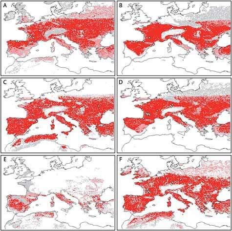 Répartition de H. neanderthalensis (images de gauche) et de H. sapiens (images de droite) à trois époques distinctes selon modélisation. Rangée du haut, période pré-H4 (avant la cohabitation des espèces) ; du milieu, période H4 (-40,2 à -38,6 milliers d'années) ; du bas, période GI8 (-38,6 à -36,5 milliers d'années). Les zones où les conditions d'habitabilité sont confirmées par 1 à 5 modèles théoriques sur 10 sont marquées en gris, les zones confirmées par 6 à 9 modèles sur 10 en rose et les zones confirmées par tous les modèles (10 sur 10) en rose.