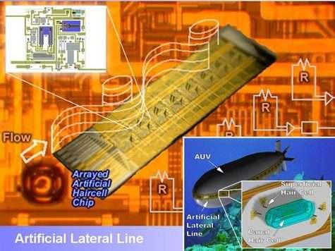 Une succession de capteurs mime la ligne latérale des poissons et peut déterminer la direction d'une vibration, ce qui reste très modeste comparé aux fonctions de l'organe réel chez l'animal. Crédit : MNTR/Université de l'Illinois, Urbana-Champaign.