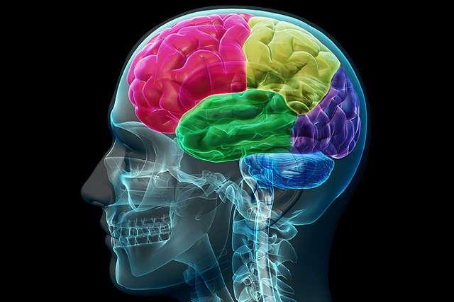 Comment réparer des lésions du cerveau après un AVC ? © aboutmodafinil.com, Flickr, CC by 2.0