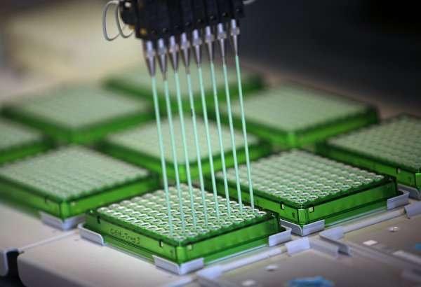 Le Genomics of Drug Sensitivity project teste un grand nombre de molécules, sur plus de 1.000 lignées cellulaires. Les premiers résultats sont déjà disponibles gratuitement en ligne. © Genome Research Limited