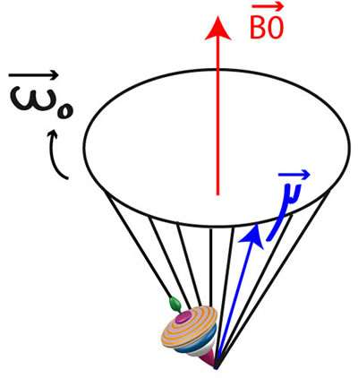 Ce schéma illustre la notion de fréquence de Larmor ω0 pour un corps doué d'un moment magnétique μ, ici une toupie. Si celle-ci est plongée dans un champ magnétique B0, le moment magnétique peut se mettre à effectuer un mouvement de précession avec pour vitesse angulaire la fréquence de Larmor. © info.radiologie.ch