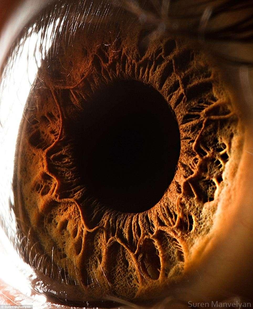 L'iris de cet œil ressemble à un paysage volcanique. Les structures à l'apparence rocheuses sont les muscles qui permettent la contraction et la dilatation de la pupille. © Suren Manvelyan