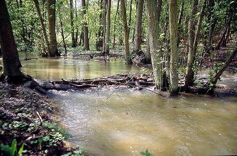 La couleur brune de cette eau est due à sa turbidité. © F. Lamiot, Wikimédia CC by-sa 3.0
