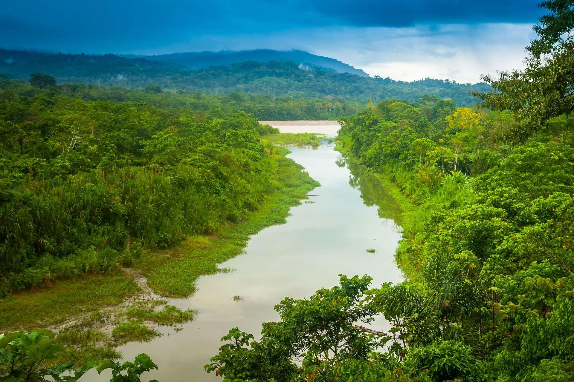 La forêt amazonienne est majoritairement présente au Brésil, et déborde sur plusieurs pays d'Amérique du Sud : le Pérou, la Colombie, le Venezuela, la Guyane, le Suriname, le Guyana, la Bolivie, et l'Équateur. © Grispb, Adobe Stock