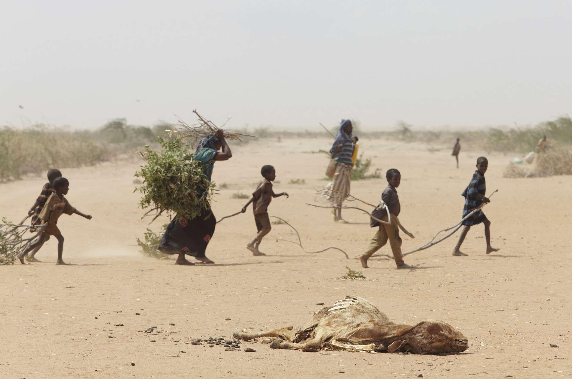 Des réfugiés à Dadaab, au Kenya, où des camps accueillent des réfugiés de guerre mais aussi climatiques. Un animal mort à cause de la sécheresse est visible au premier plan. © Andy Hall/Oxfam East Africa, Wikimedia Commons, CC By-2.0