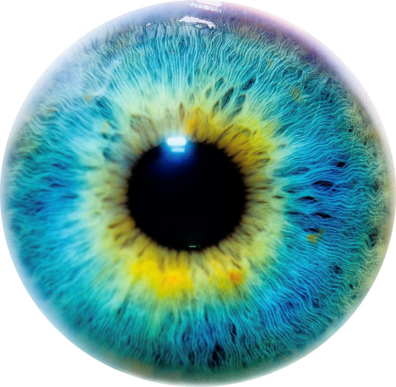 Comment le cerveau peut-il voir des choses qui n'existent pas et être sujet à des hallucinations ? © Thomas Tolkien, Flickr, CC by 2.0