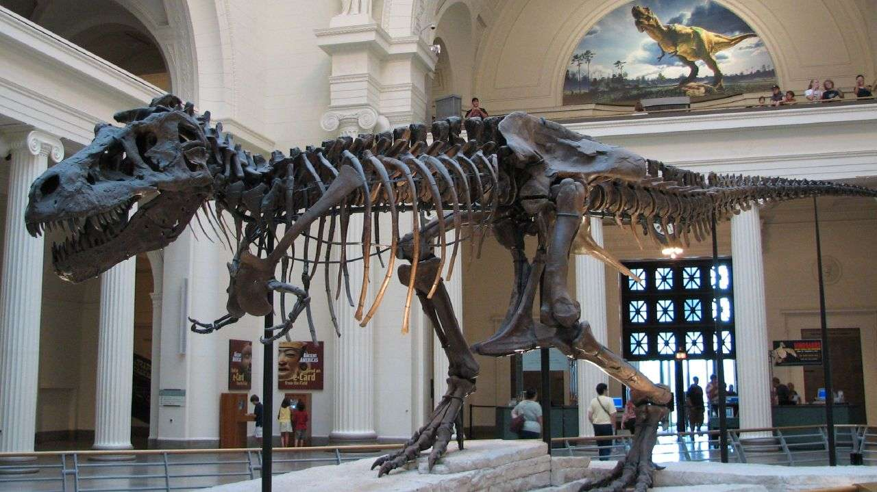 Les tyrannosaures ont vécu à la fin du Crétacé, il y a 70 à 65 millions d'années. Plus de 30 fossiles de ce théropode ont été découverts à ce jour. © Steve Richmond, Wikimedia Commons, cc by 2.0