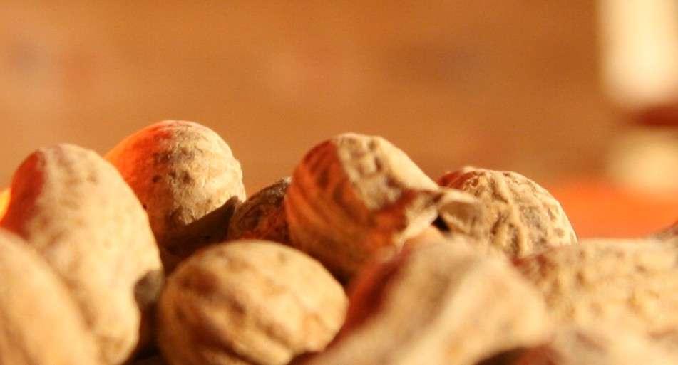 L'arachide est une plante originaire du Mexique, cultivée pour ses propriétés oléagineuses et ses graines, les fameuses cacahuètes, dont le nom est d'origine aztèque. Le végétal, et surtout ses dérivés, compte parmi les premières causes d'allergies alimentaires. Mais peut-être, dans quelques années, les allergiques aussi auront-ils droit d'y goûter. © mil8, Flickr, cc by 2.0