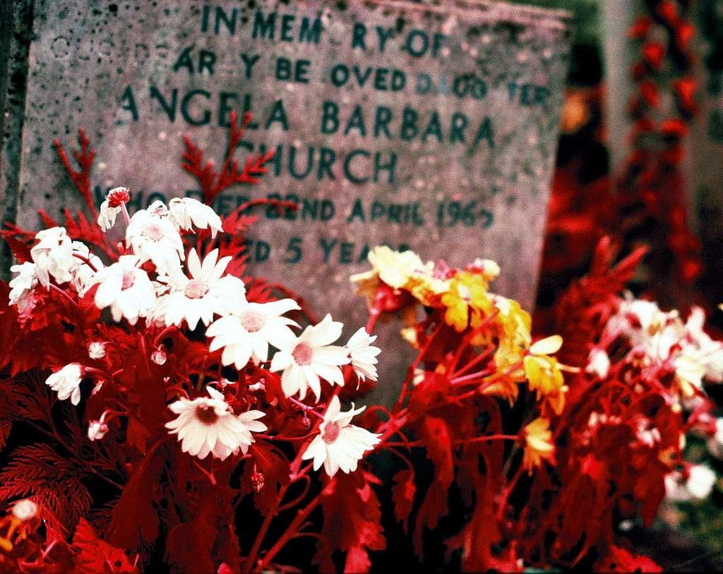 Nous avons l'habitude de déposer des gerbes de fleurs sur les tombes de nos proches. Ce rite pourrait remonter à 14.000 ans. © El Freddy, Flickr, cc by nc nd 2.0