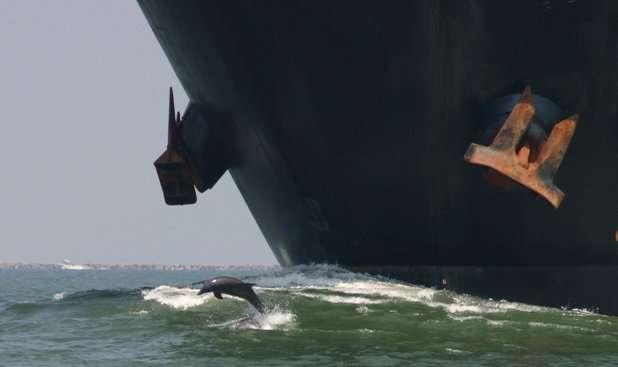 Le trafic maritime a engendré une nuisance sonore pour les espèces marines. ©mhowry, Flickr, cc by 2.0