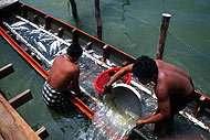 La pêche et l'aquaculture fournissent emplois et revenus tout en renforçant la sécurité alimentaire.
