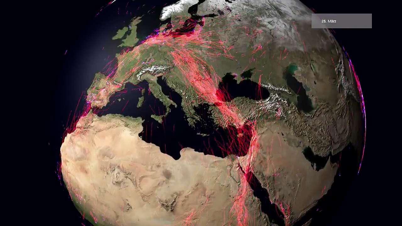 Un an de migrations animales sur la planète : étonnant...