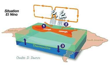 En situation El Niño, les alizés s'affaiblissent et le gradient de température de surface de l'océan disparaît. La circulation atmosphérique de Walker est modifiée : deux cellules atmosphériques se forment sur l'océan Pacifique. Toute la bande océanique équatoriale est à la même température. Ces 60 dernières années, il semble que les conditions atmosphériques tendent à être plus souvent dans cette configuration. © D. Ducros, Cnes