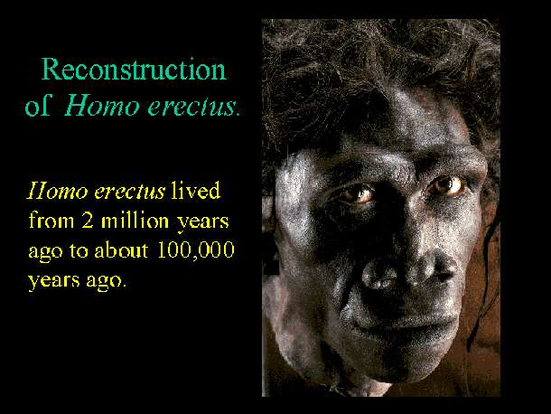 Une reconstitution d'Homo erectus. Crédit : East Tennessee State University