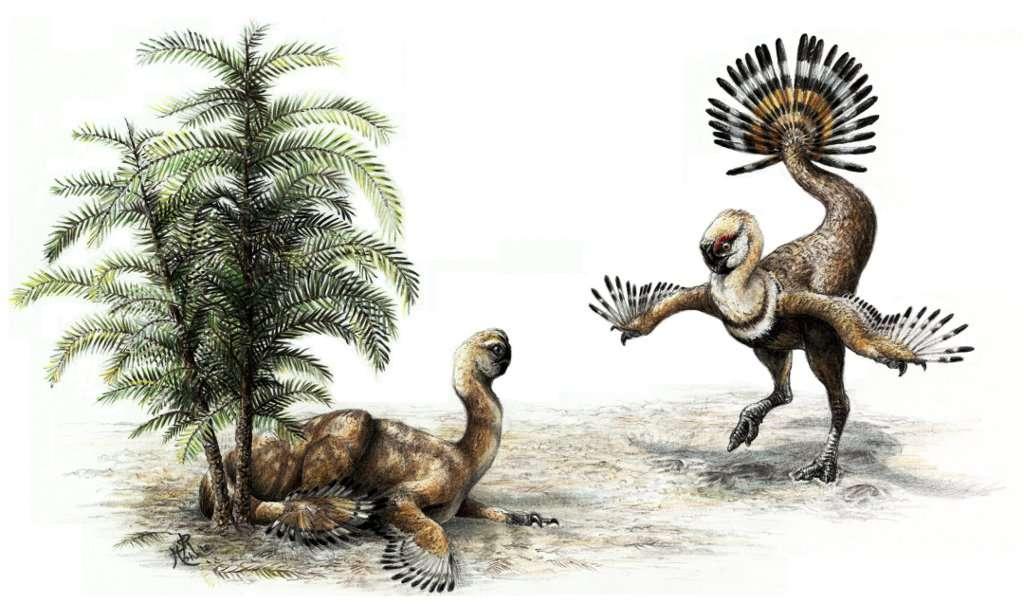 Cet Ingenia yanshini est un oviraptosaure qui vivait en Mongolie voilà 70 millions d'années. Ce dinosaure était herbivore et possédait un bec ressemblant à celui des oiseaux modernes. Il pourrait avoir utilisé les plumes de sa queue mobile pour parader à la manière des dindons actuels. © Sydney Mohr