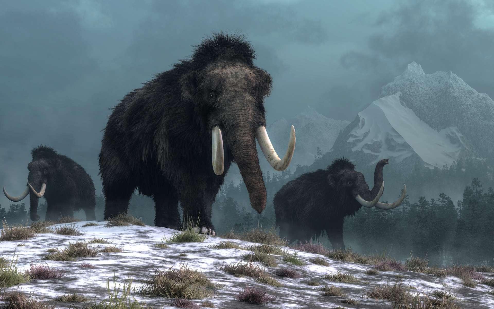 Les ossements d'au moins 14 mammouths ont été découverts au Mexique. Ce serait « la plus grande découverte de ce genre » jamais effectuée, selon l'INAH. © Daniel, Adobe Stock
