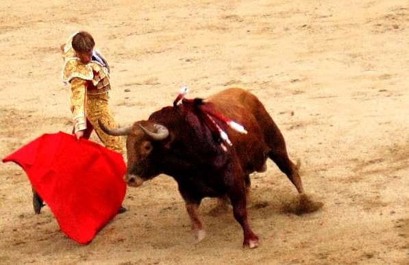 Le taureau de la corrida voit surtout un humain qui l'agresse. © Enrique Dans, Flickr CC by-nc-sa 2.0