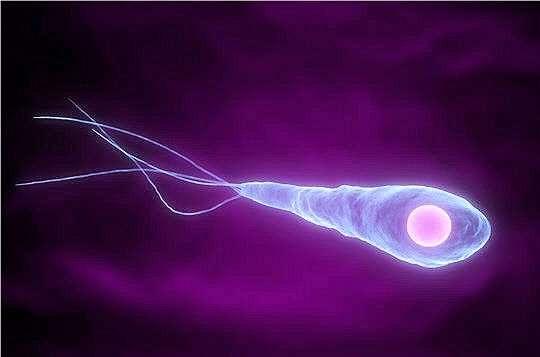 Le bacille de Nicolaïer est responsable du tétanos. © DR