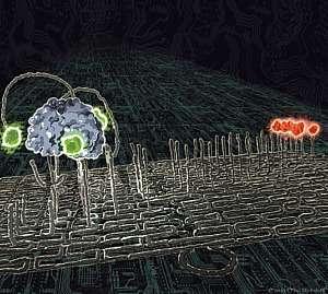 Un nanorobot (la masse grisâtre à gauche), porteur de marqueurs (verts), progresse lentement mais sûrement le long d'un chemin pavé de brins d'ADN, dont il se sert comme les barreaux d'une échelle et qui le conduisent vers sa cible (la masse rouge, à droite). © Paul Michelotti